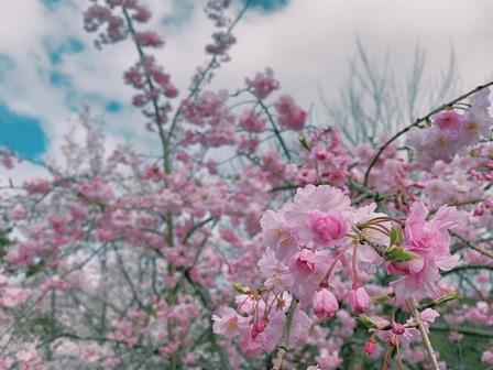 桜、結婚式、新生活スタート